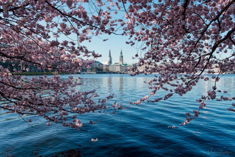 Binnenalster im Frühling