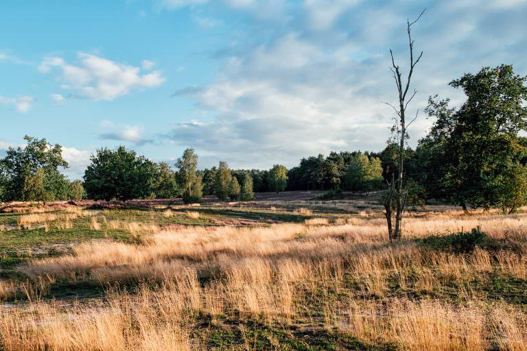 Fischbeker Heide