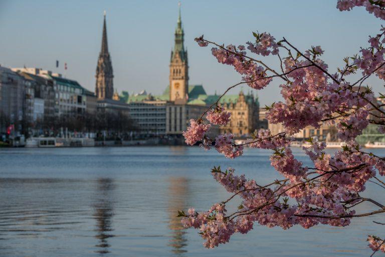 Kirschblüte an der Alster