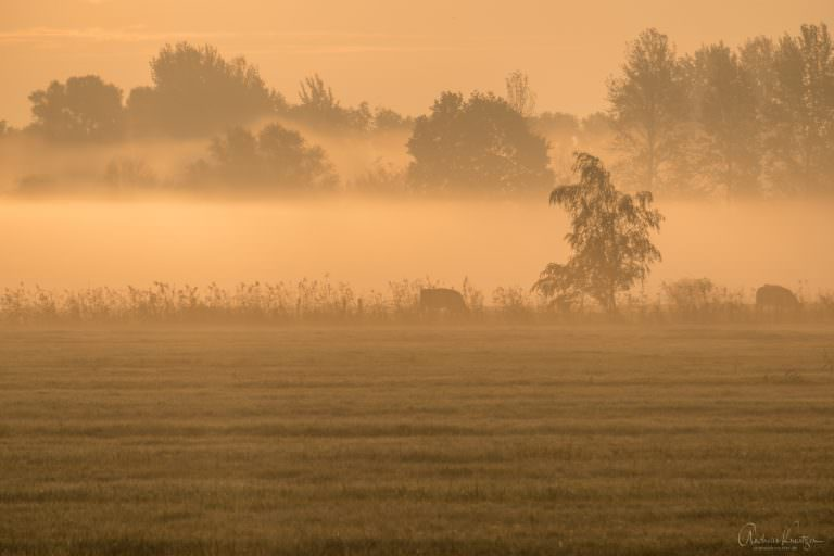 Sonneaufgang mit Nebel