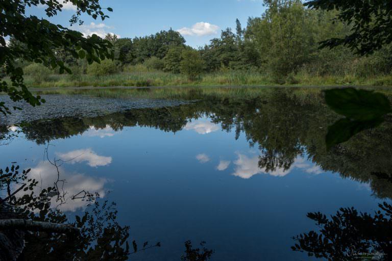 Teich im Niendorfer Gehege