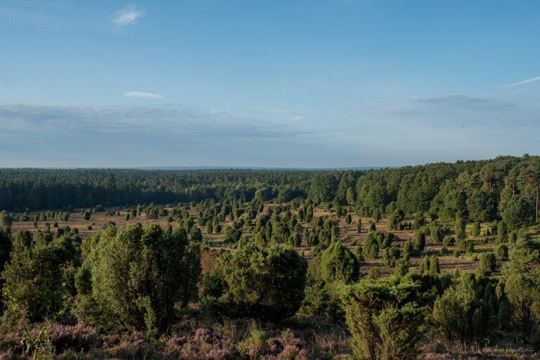 Blick auf den Steingrund in der Lüneburger Heide