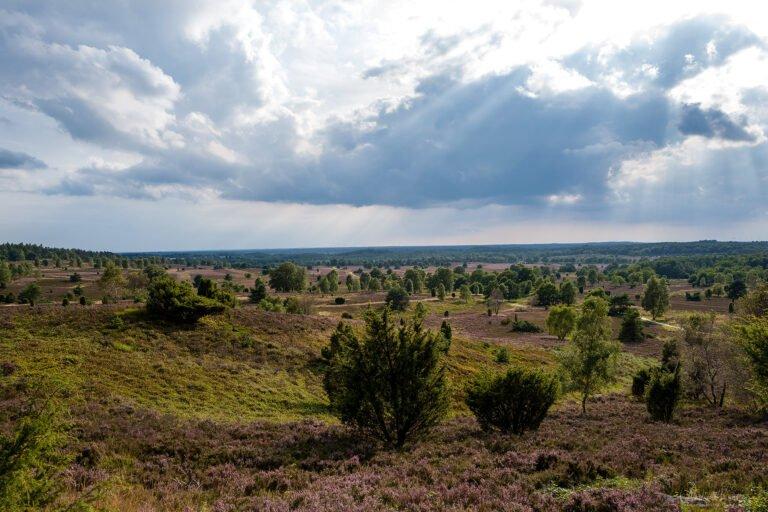 Blick vom Wilseder Berg in der Lüneburger Heide