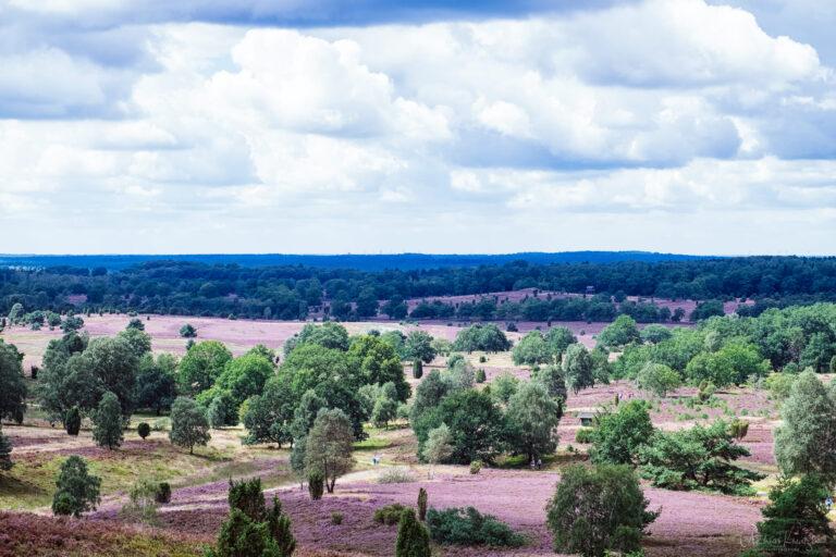 Blick vom Wilseder Berg auf die Lüneburger Heide